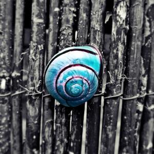 snail-456965_1280