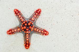 starfish-74535_1280