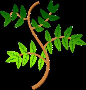 leaves-160960_1280