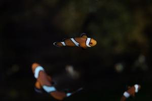 clown-fish-1149696
